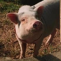 Bacon Flynn